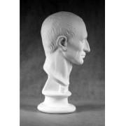 Учебное пособие гипсовая фигура - голова Гай Юлий Цезарь
