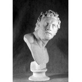 Учебное пособие гипсовая фигура - бюст Пергамец
